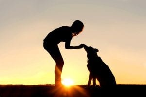 Tips for Bonding With Your Dog