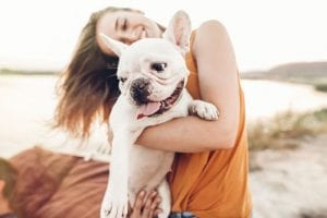 How to Keep Your French Bulldog Safe This Summer