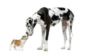 What is Small Dog Syndrome?