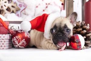 Top 3 Tips for Adopting a Dog for Christmas