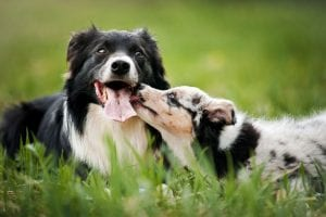 How to Help Your Dogs Get Along