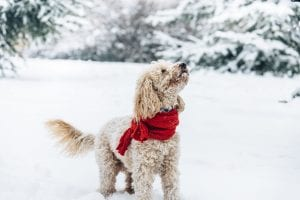How to Walk Your Pooton in the Winter