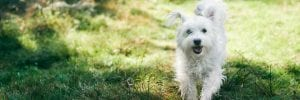 Dog Allergies: How Allergy-Sufferers Can Adopt and Live with Dogs