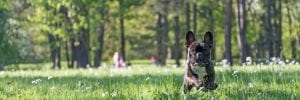 How to Protect Your Small Dog's Joints