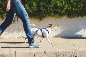 Owner walking dog on sidewalk