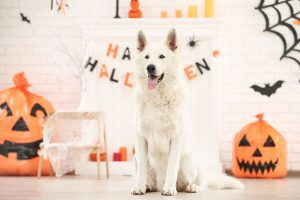 dog sitting in front of halloween decorations